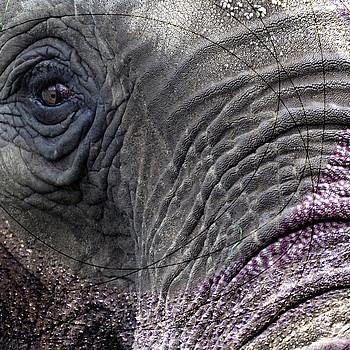 Elephant Skin - Plata FR