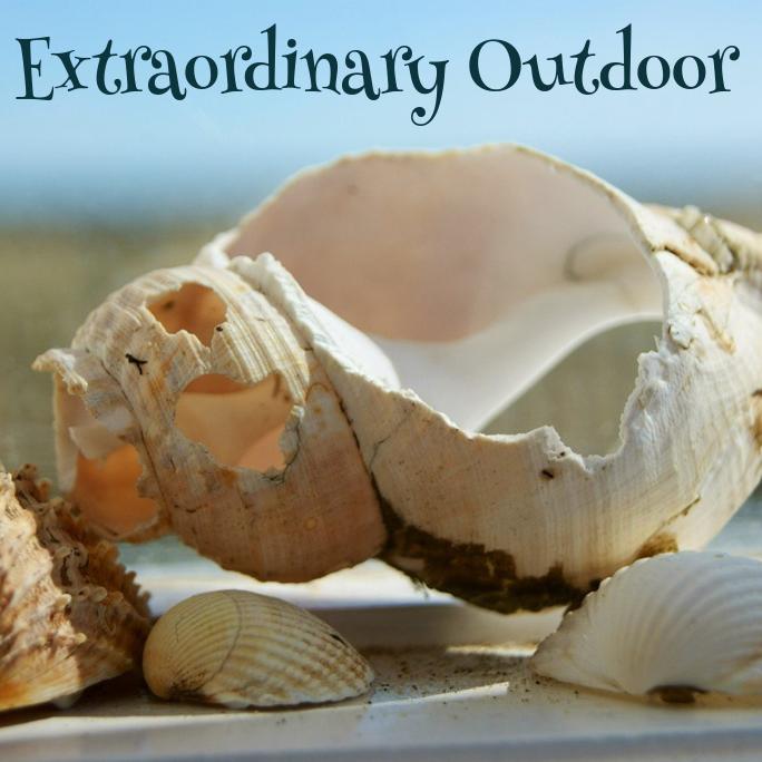 Extraordinary Outdoor